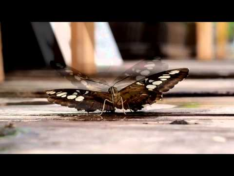 Krása živých motýlů, Arboretum Nový Dvůr, Stěbořice