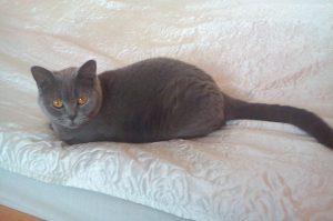 Zatoulaná kočka Sofi