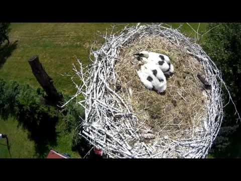 Siesta včapím hnízdě