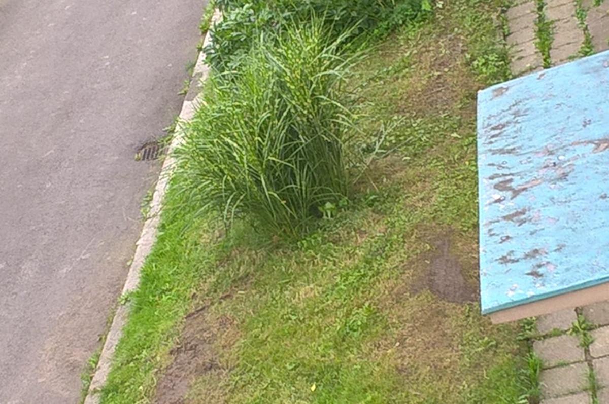 Racionalizace sekání trávy