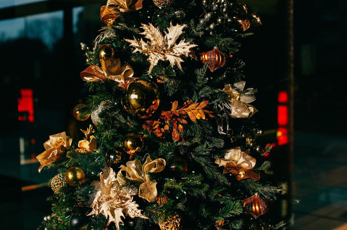 Chcete si sami uříznout vánoční stromek? Jeďte do Vratimova
