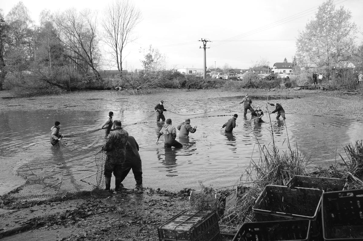 (FOTO) Tradiční výlov Mitrovického rybníka