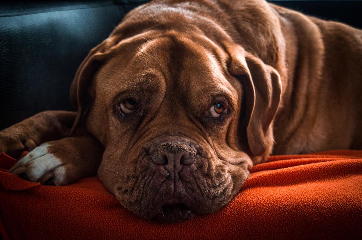 Výzva pro všechny majitele psů