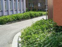 Zvýšená druhová pestrost kolem nového parkoviště