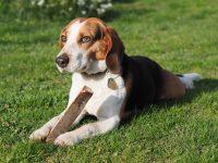 Pro majitele psů anájemce pozemků garáží nebo zahrádek