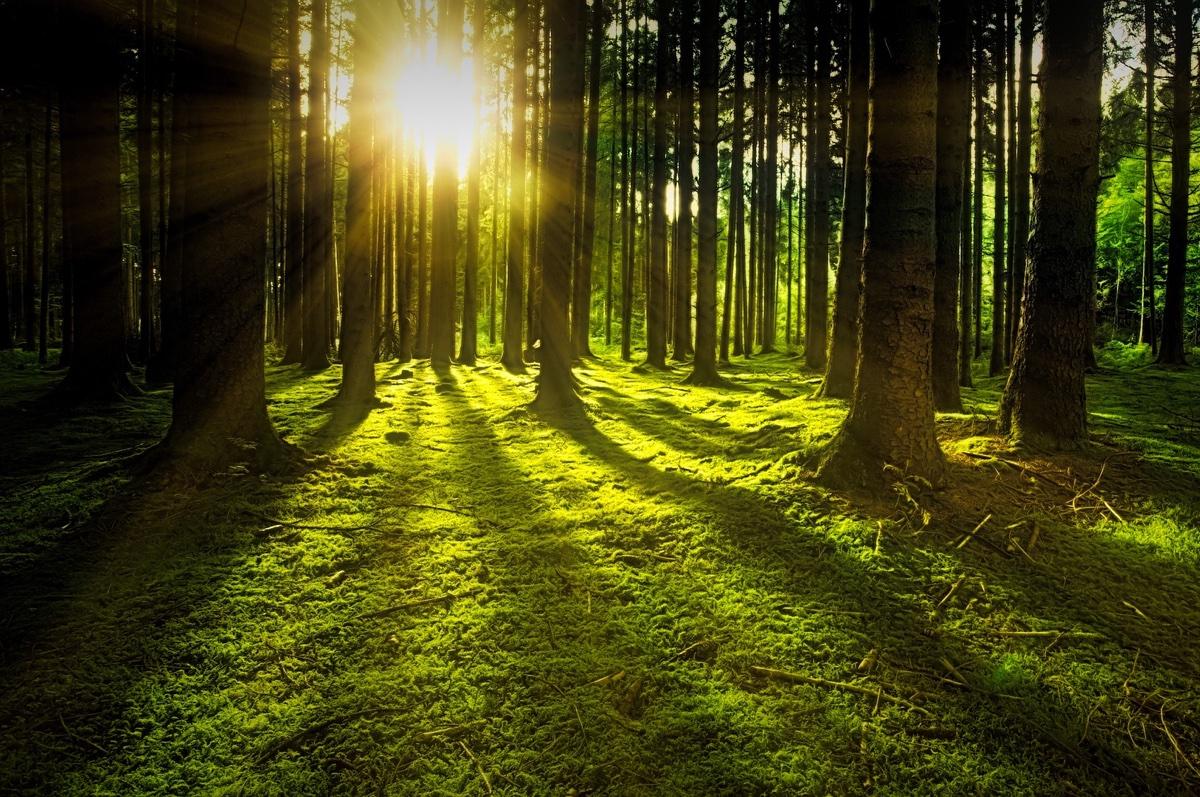 Získejte až 30 tisíc Kč na podzimní výsadbu stromů
