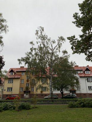 Kácení stromu na Příborské ulici