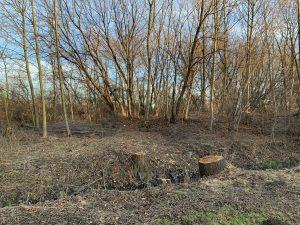 """Leden 2020, aktuálně je okolí """"prořezáno"""", respektive byly pokáceny i některé nebezpečné stromy."""