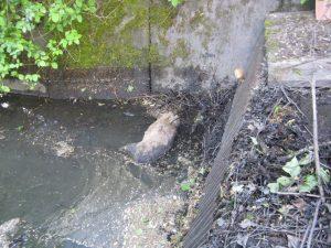 Další smrt v odvodňovacím kanále