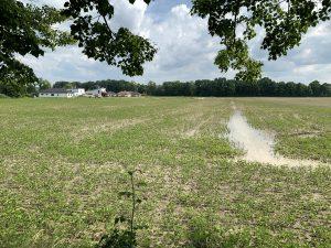 Pozemek má problémy s podzemní i dešťovou vodou, 25.6. 2020