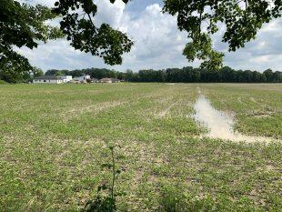 Hrabová: Vlokalitě B225 se prodává obrovský pozemek