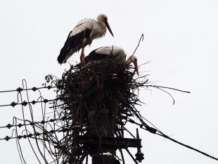 (FOTO) Nové hnízdo hrabovského čapího páru