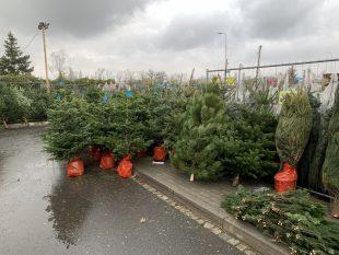 Vánoce 2020: Nabídka vánočních stromků vedle Tesca