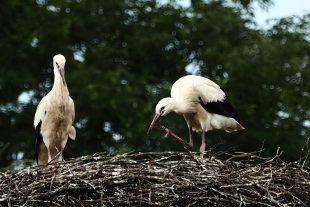 (FOTO) Co se děje na hnízdě
